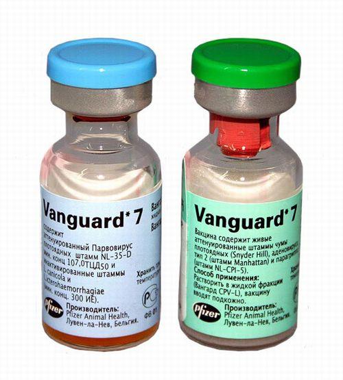 Вангард 7 схема вакцинации