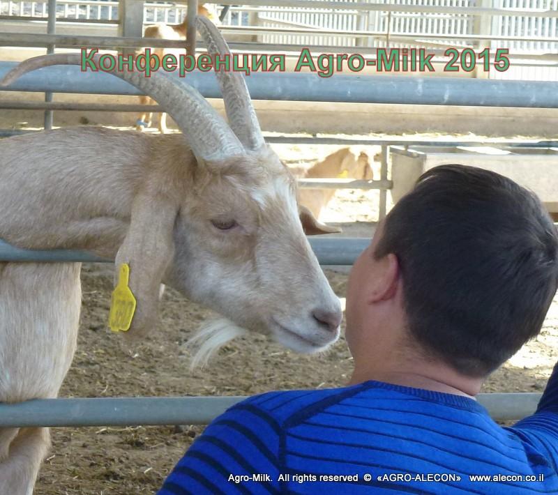 коза ферма